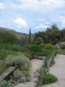Jardin île de Tatihou