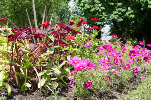 Fleurs du jardin botanique