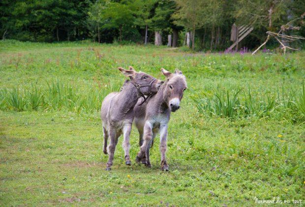 Les ânes ©Leslie LEFEBVRE