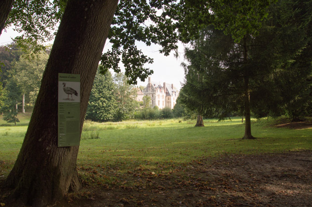 Le parc animalier de Clères, grands arbres et clairière