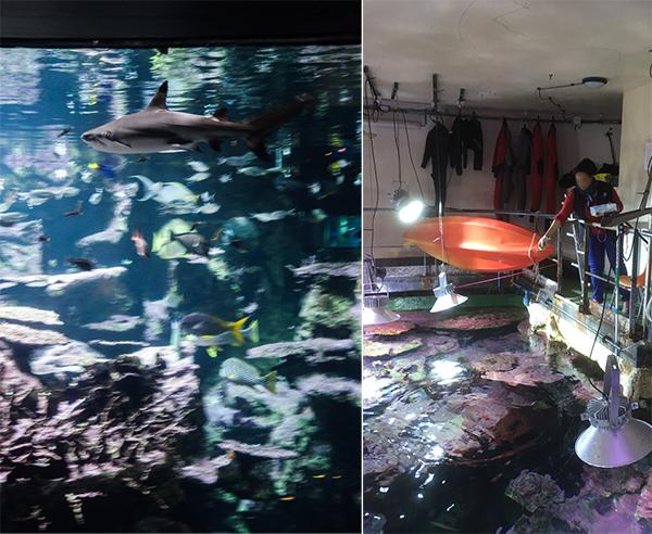 L'aquarium abyssal et son requin. La salle de nourrissage des poissons