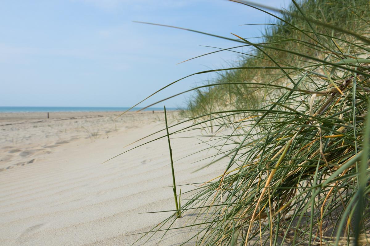 Dunes et plage de Bricqueville-sur-Mer